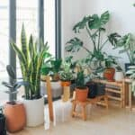 6 Ways To Decorate Your Living Room With Plants