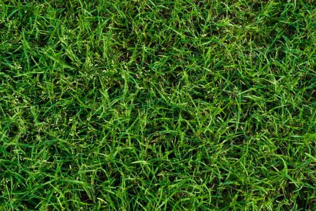the best types of grass