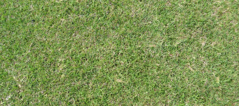 best grasses for the lawn