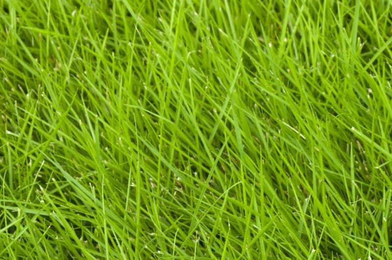 best grasses