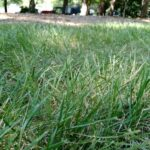 4 Best Types of Grass for Arkansas and How to Grow Them