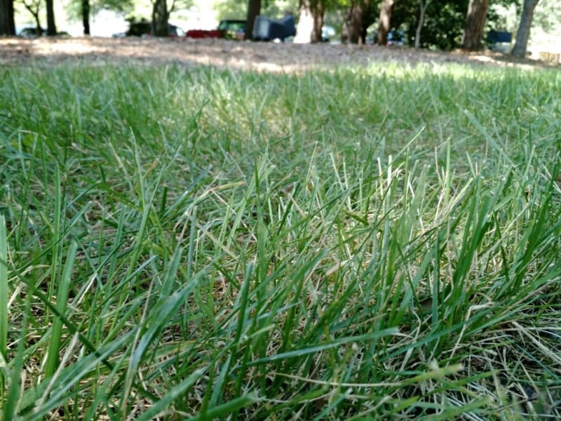 best types of grass
