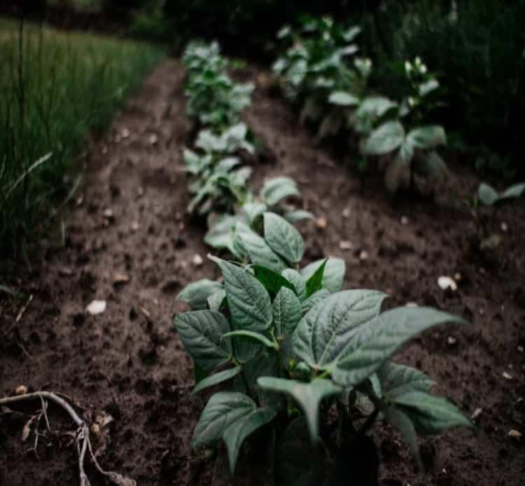 soil of garden