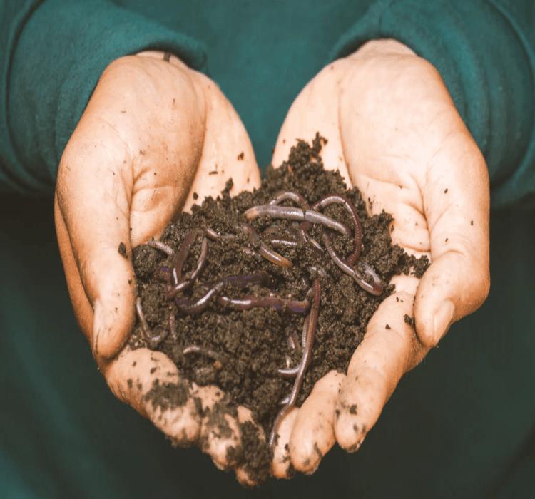 garden's soil