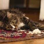 7 Carpet Cleaning Tips to Keep It Looking New